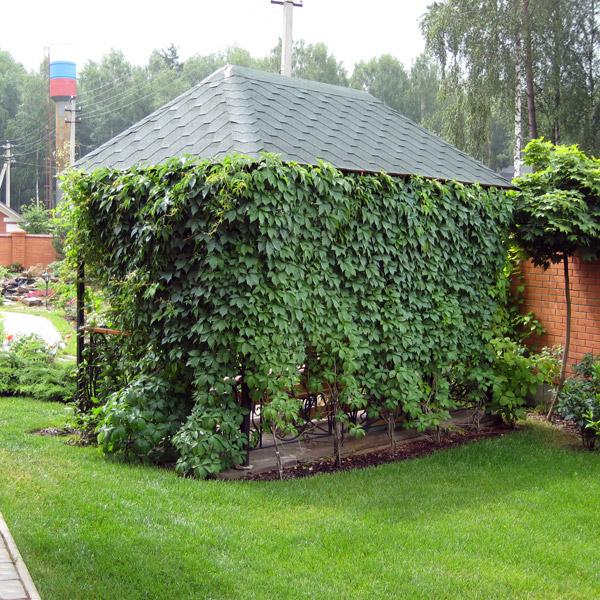 Идеи для сада и огорода своими руками: фото с описанием